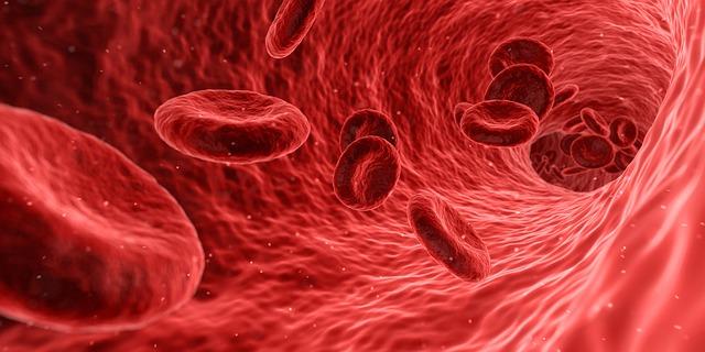 sang cellule